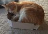 Calli Snoozing in a Box